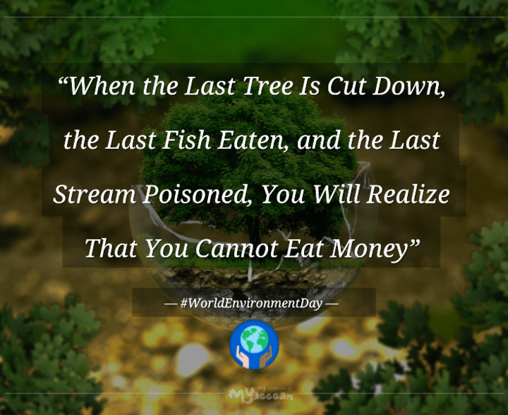 MYAEGEAN-tribute_the-last-tree-cut_quote_environment_awareness-min