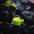 ecosystem sea angelfish undewater
