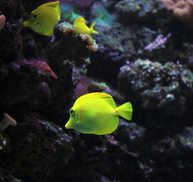 ecosystem sea angelfish undewater